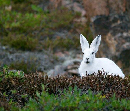 conejo pascua primavera