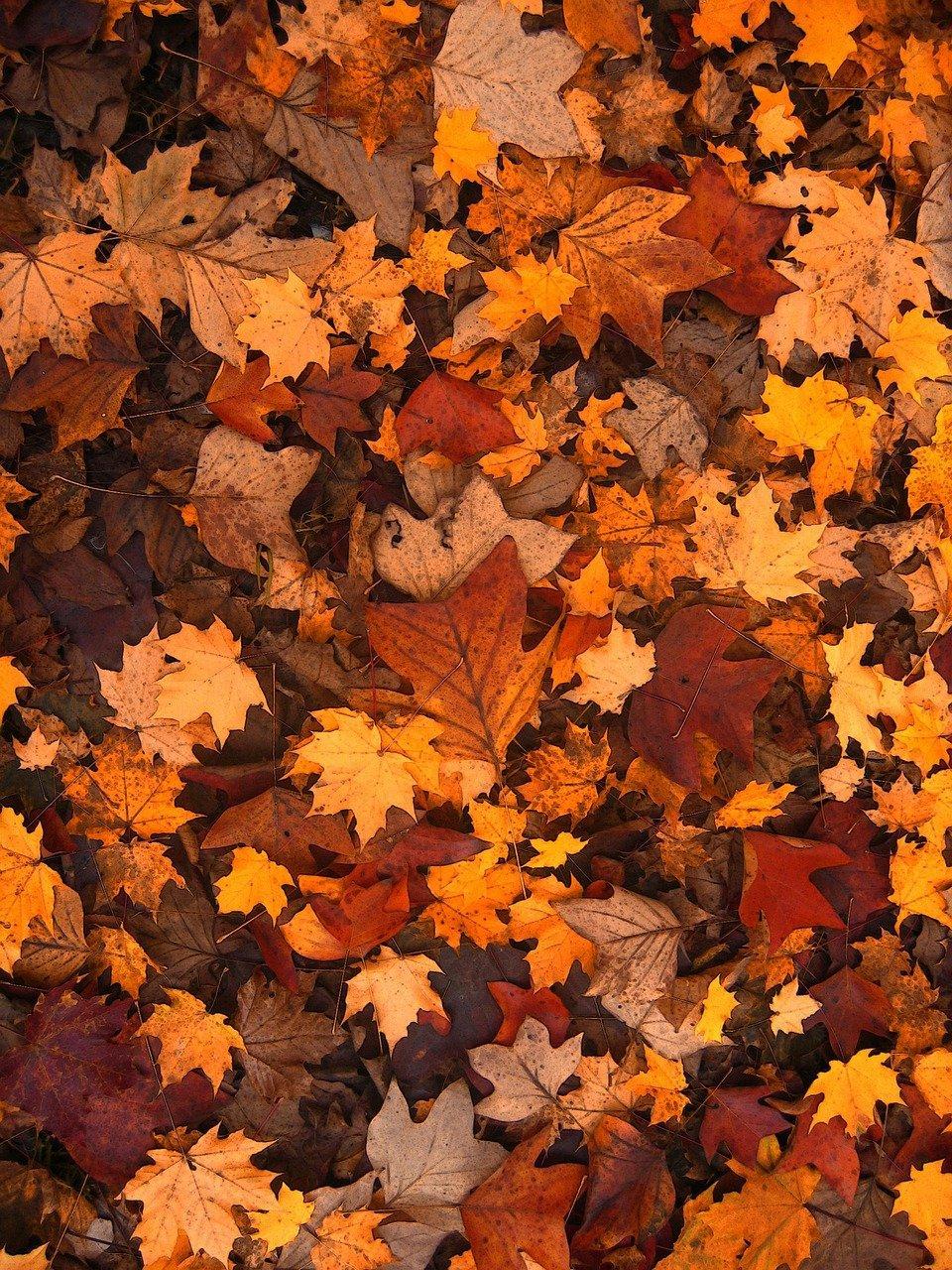 hojas otoño samhain halloween